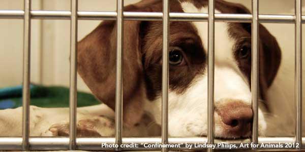 confinement.lindsey-phillips.jpg
