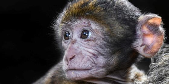 monkeySF.jpg